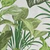 Bromelia</br>Bianco